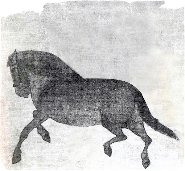 Die Rabenfrau: Zum Jahr des Pferdes