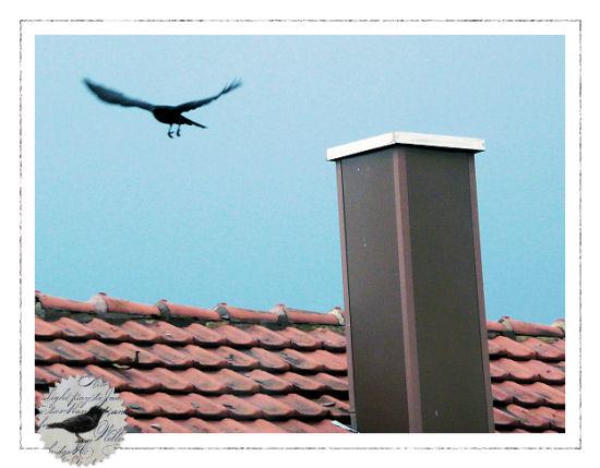 Die Rabenfrau: Die Zeit der schwarzen Vögel