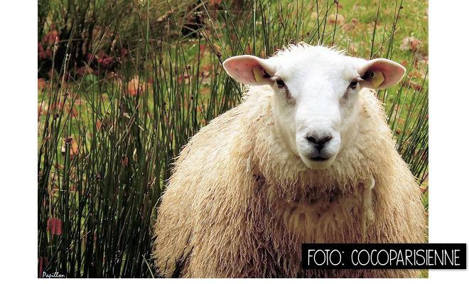 Die Rabenfrau im chinesischen Jahr des Schafes