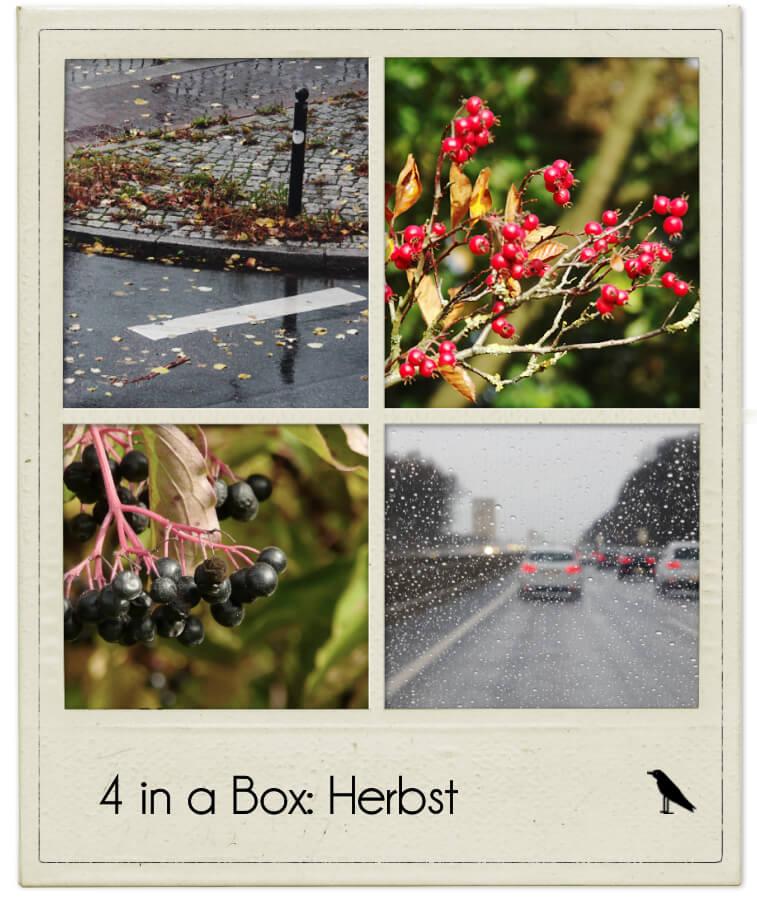 http://rabenseiten.de/blog/blogger16/11/3.jpg